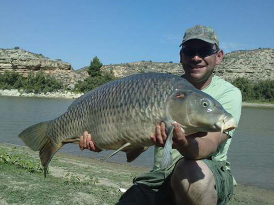 Spanish Common Carp Fishing On The River Ebro